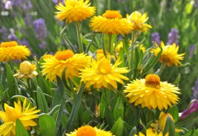 fleurs de bach small
