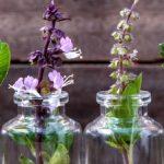 aromateswide